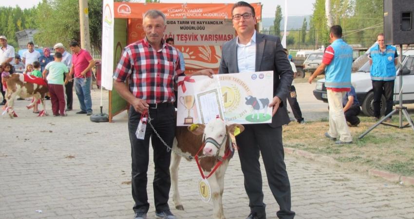 Hisarcık'ta en güzel buzağı yarışması