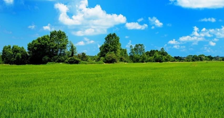 Tarımda gelecek 5 yılın temel stratejisi; Milli Tarım, Güçlü Yarın
