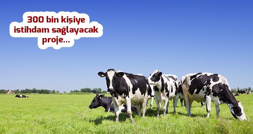Diyarbakır'da hayvancılıkta 15 yılda yüzde 72'lik artış