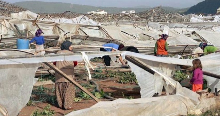 Tarım sigortalarında yenileme oranı artıyor