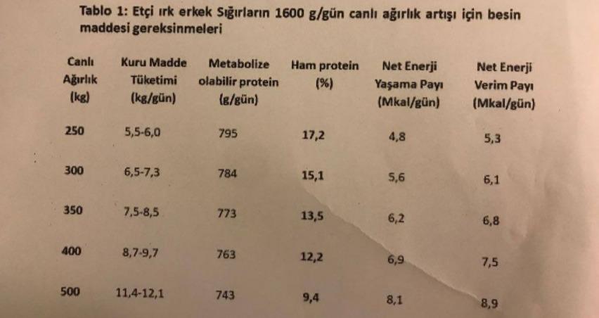 Besiye alınan sığırlardan nasıl yüksek performans alınır?