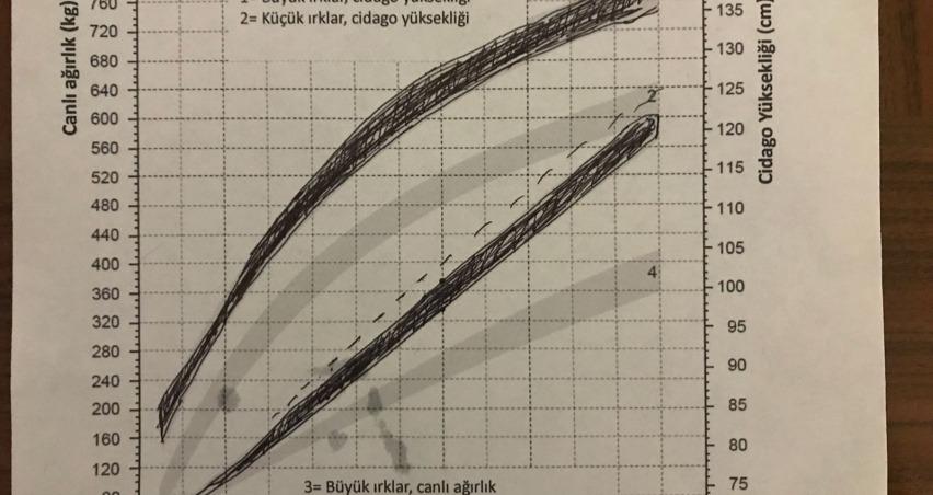 Düve Gelişim Grafiği ve Tablosu