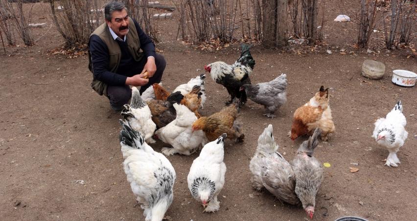 Ağrı'dan Irak'a Hint horoz ve tavuklarını ihraç edecek