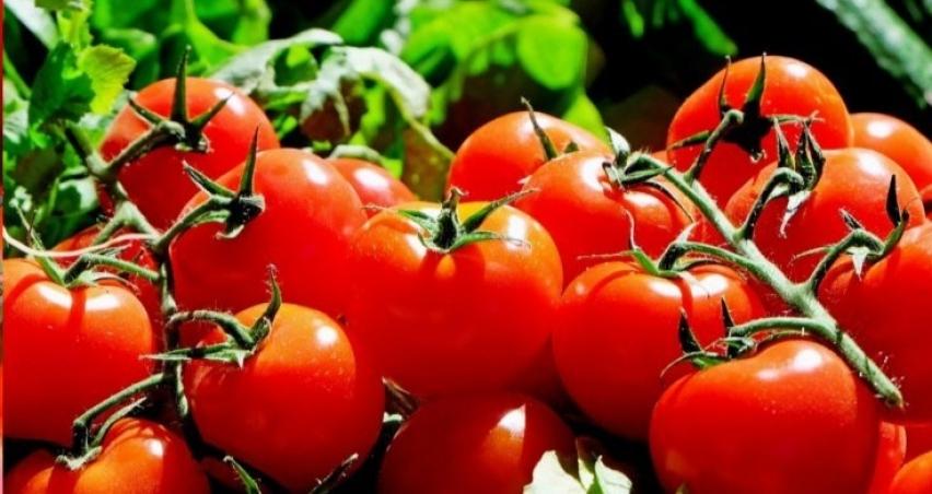 Rusya 5 şirketten daha domates alacak