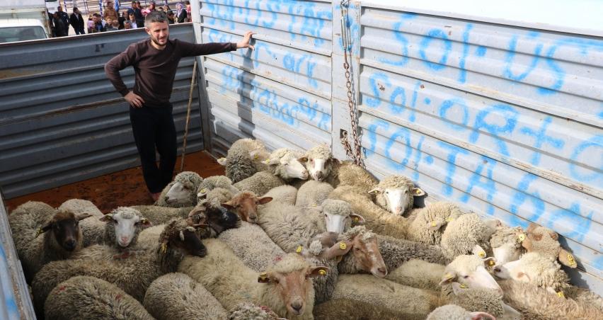 Genç çiftçilere bin 443 küçükbaş hayvan verildi