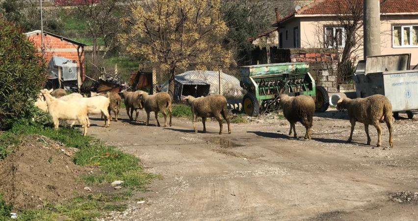 Çanakkale'de 43 köy karantina altına alındı
