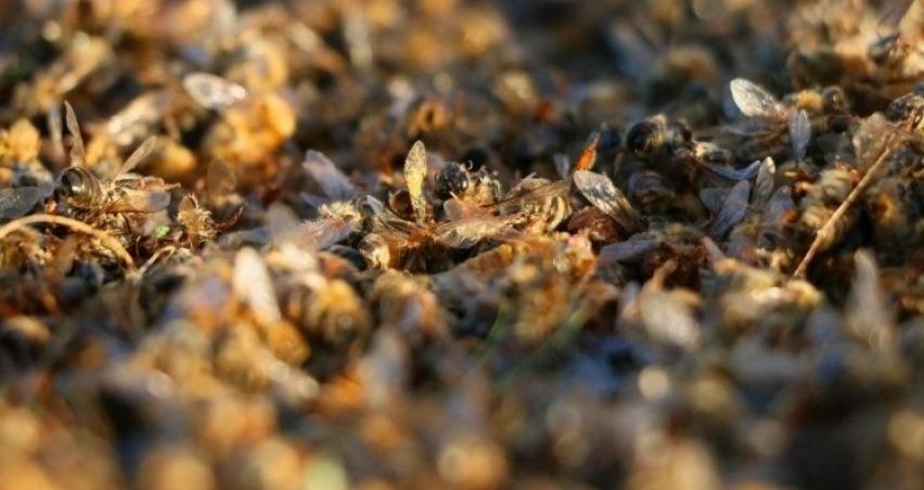 Arıcılar bahar mevsimi başında büyük bir şok yaşadı