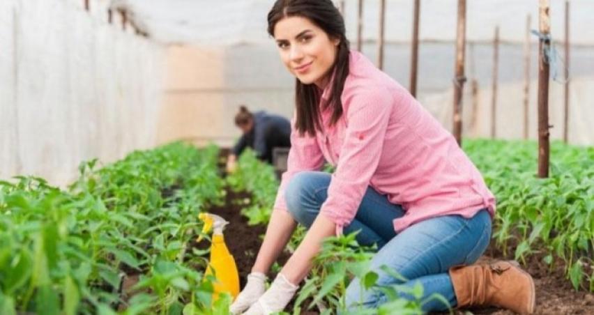Genç çiftçi hibe desteği için başvuru şartları!