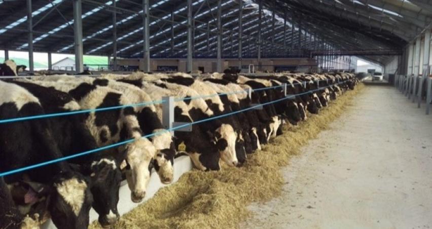 Dişi sığır kesiminde olumlu azalma