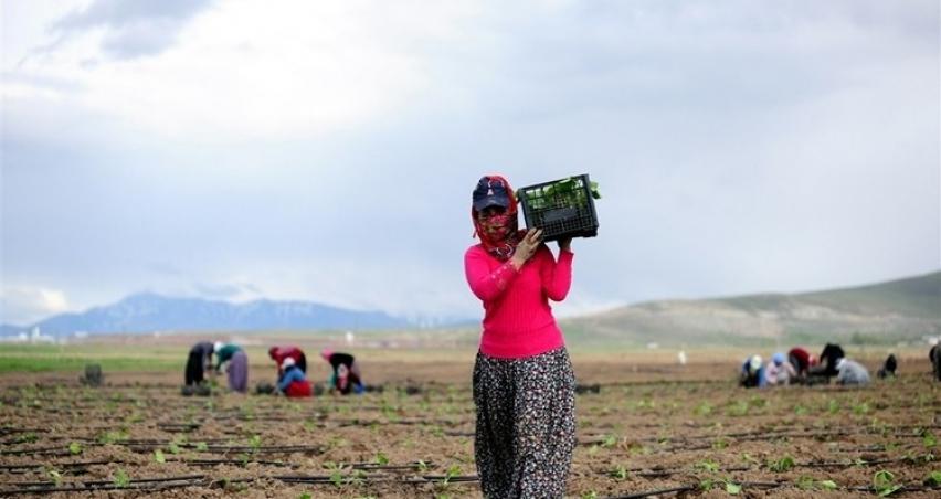 Tarım Ocak Ayında Bile 5 Milyona Yakın İstihdam Sağladı…