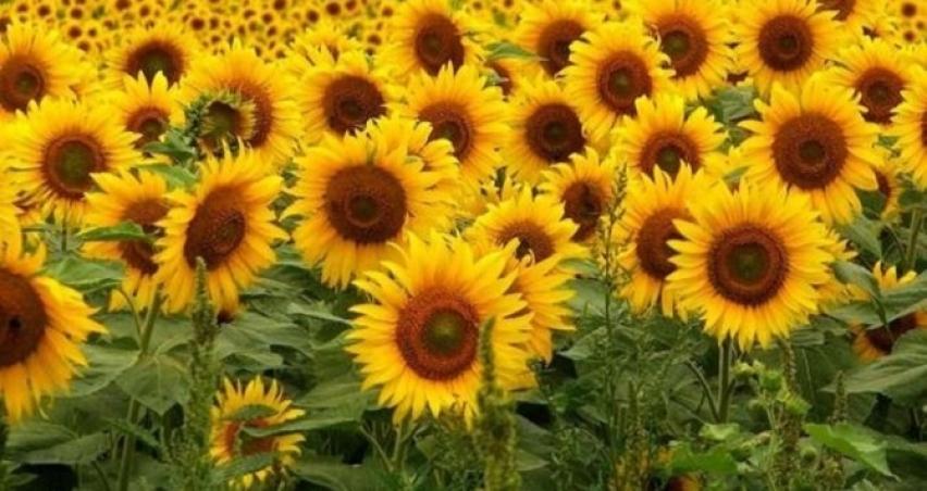 Bitkisel Yağ Sektörünün Kota Memnuniyeti
