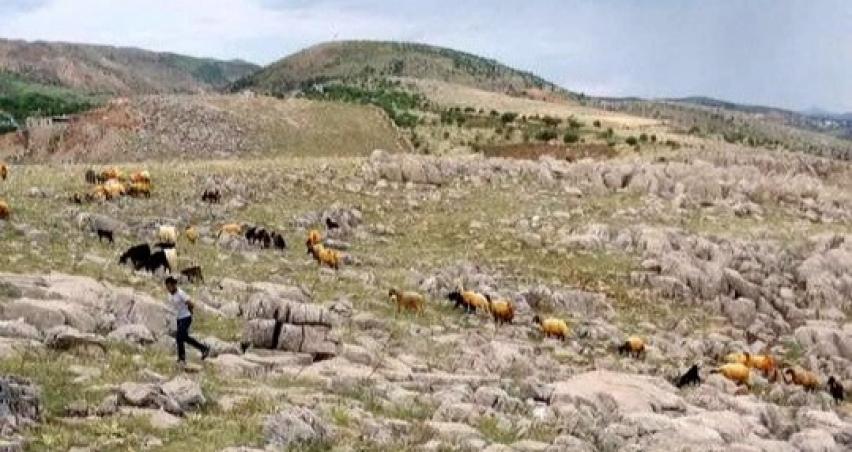 Yıldırım düşen sürüden 23 koyun telef oldu