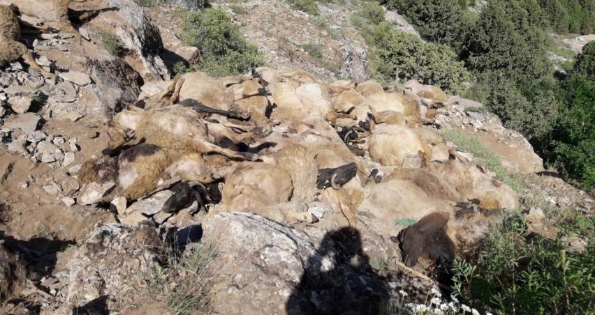 Bir sürü vakası da Bitlis'ten... 200 koyun telef oldu!