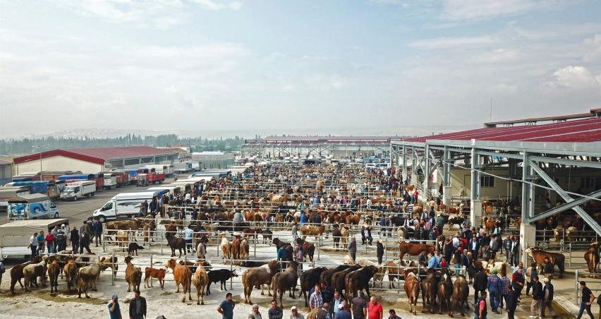 Çorum'da yeni hayvan pazarı açıldı