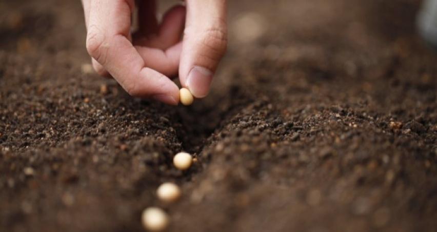 Tohum desteği başvurularında son üç gün