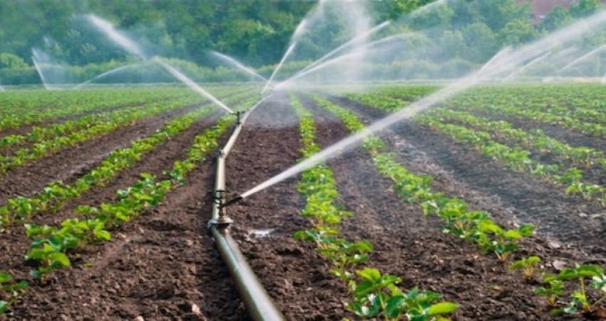 FAO ve OECD tarım ürünleri fiyatlarında düşüş bekliyor