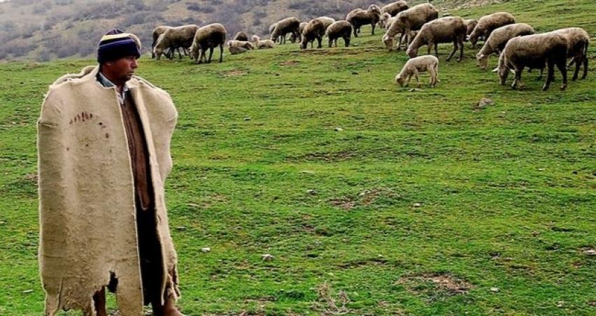 Çoban istihdam edene büyük destek!