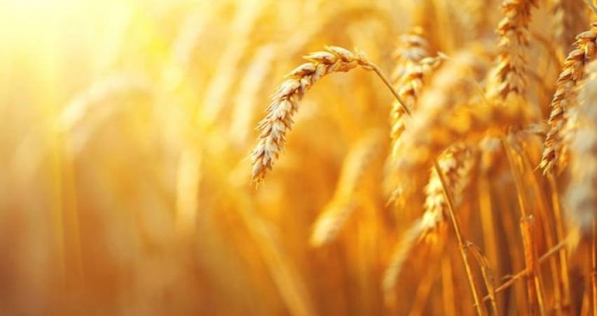 Tarım ÜFE Haziran verileri açıklandı