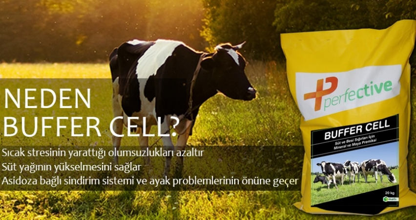 Neden Perfective Buffer Cell?