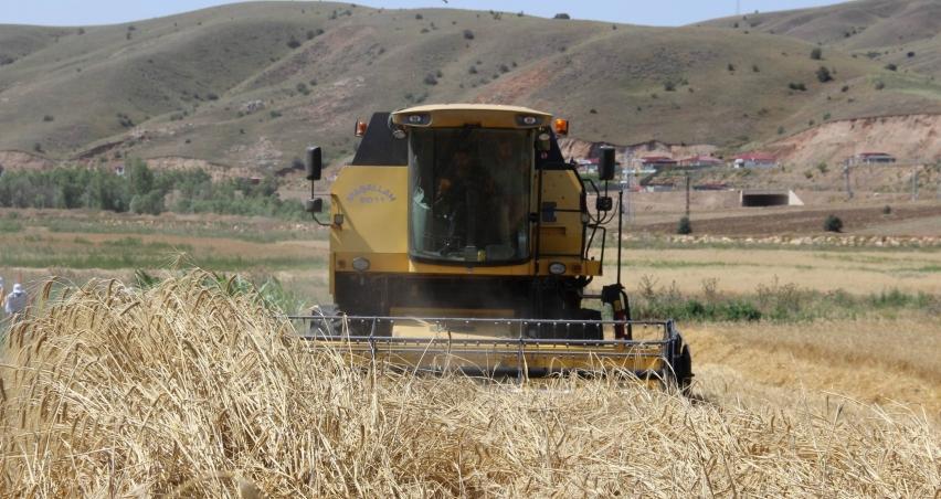Türkiye'nin buğday ambarında hasat başladı