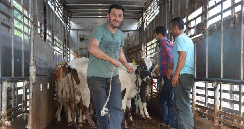 Genç çiftçiler, büyükbaş hayvanlarına kavuşuyor