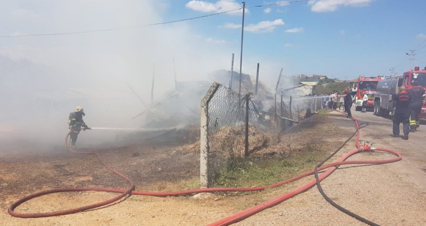 Çiftlik yangınında 30 büyükbaş hayvan son anda kurtarıldı!