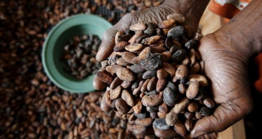 Kakaoda virüs alarmı