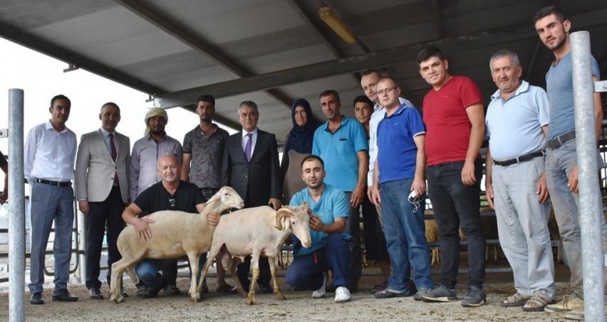 Genç çiftçilere hayvanları teslim edildi!