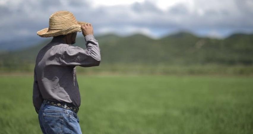 Küresel gıda fiyatları durağan seyrediyor