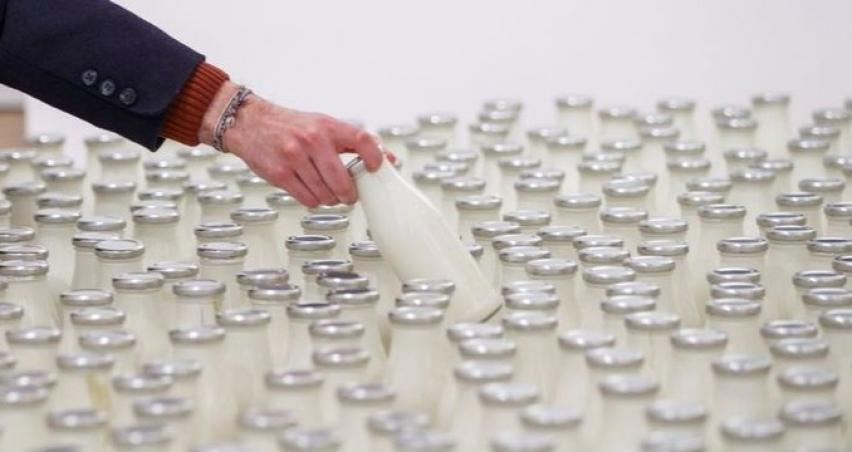 Toplanan İnek Sütü Miktarı Temmuz'da Arttı
