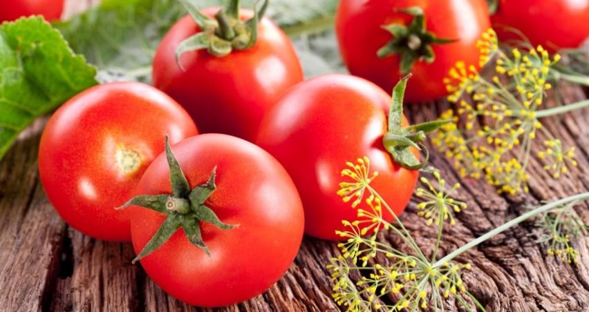 Rusya'dan domatese yeşil ışık ama...