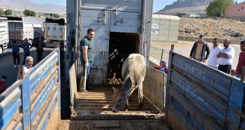 Kayseri'de genç çiftçiler hayvanlarına kavuşuyor