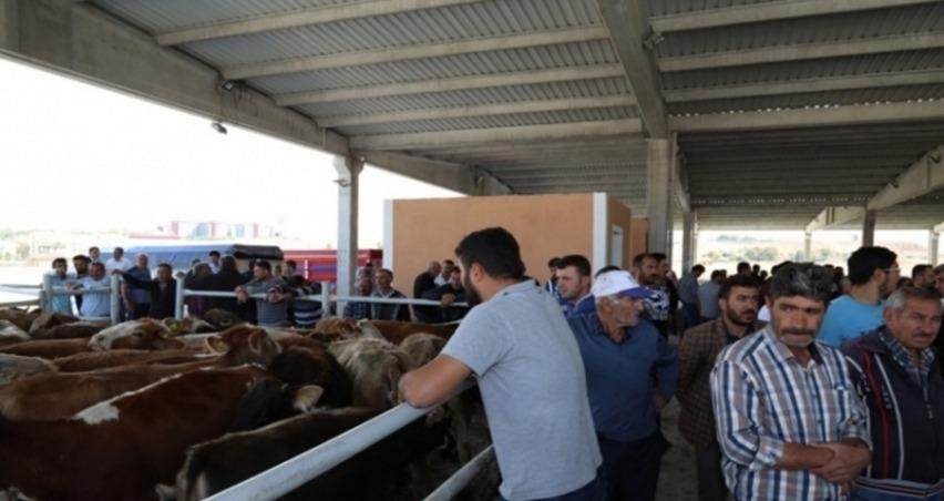 135 genç çiftçi hayvanlarını teslim aldı