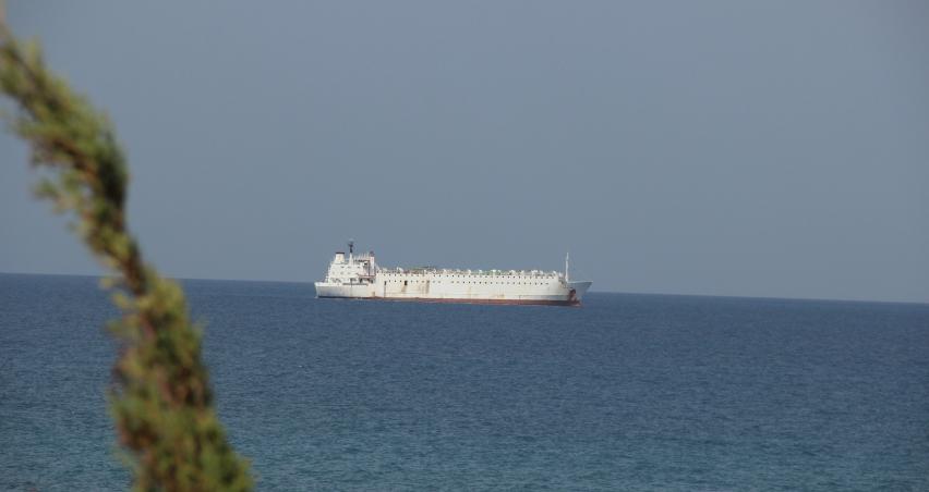 5 bin ithal Angus 3 haftadır gemide bekliyor
