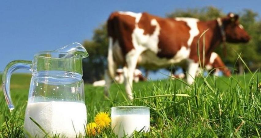 Tavuk yumurtası üretimi azaldı, toplanan inek sütü miktarı arttı