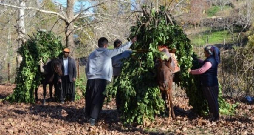 Orman köylüsüne 2,1 milyar liralık destek