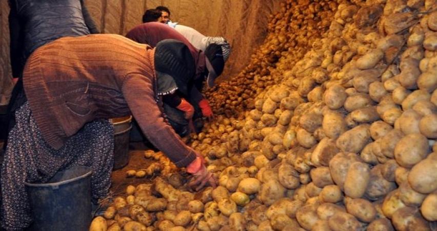 'Patates ve bakliyat fiyatları belirgin oranda yükseldi'