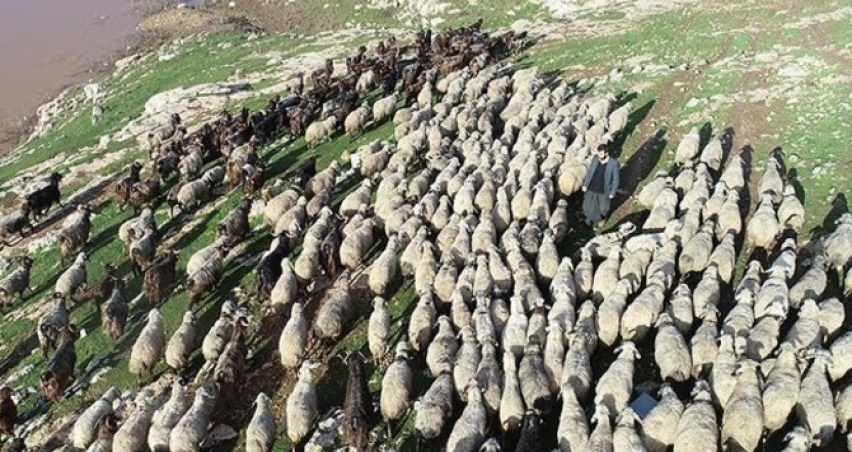 300 koyun projesi hangi tarihte sona erecek?