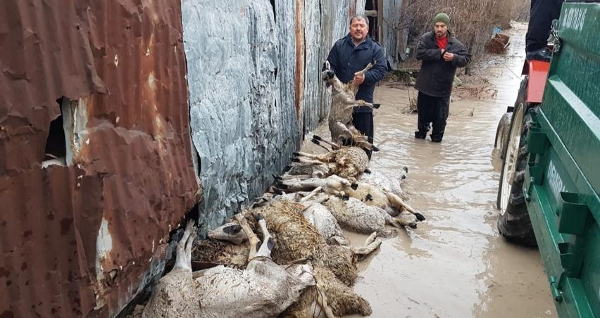 Sel bastı hayvanlar telef oldu!