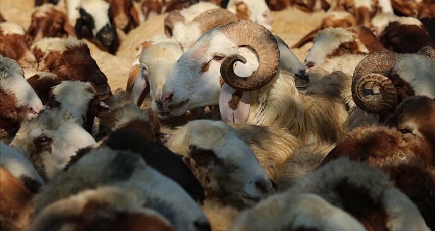 Koyun keçi destek ödemeleri ne zaman yatacak?