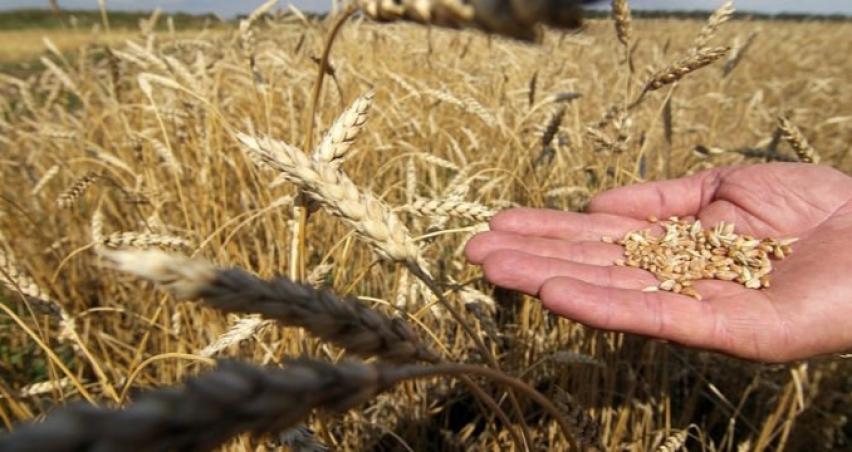 2018 yılı bitkisel ürün fiyatları açıklandı