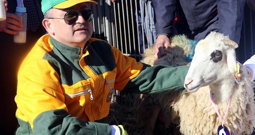 Bakan altız yavrulayan koyuna nazar boncuğu taktı!