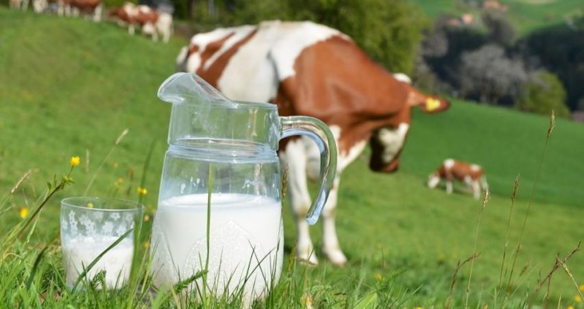 2019 Ocak ayı çiğ süt desteği ödemesi yapılıyor