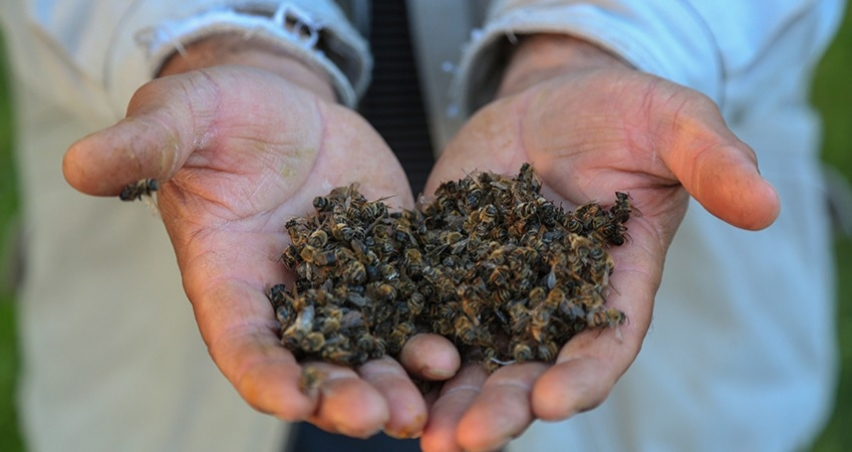 103 kovanda bulunan arıların tamamı öldü!