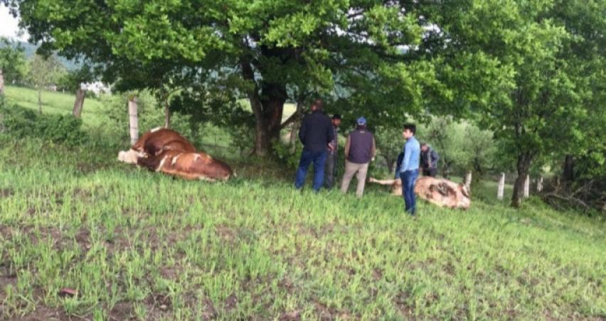 Bursa'da besi çiftliğine yıldırım düştü! Hayvanlar telef oldu...