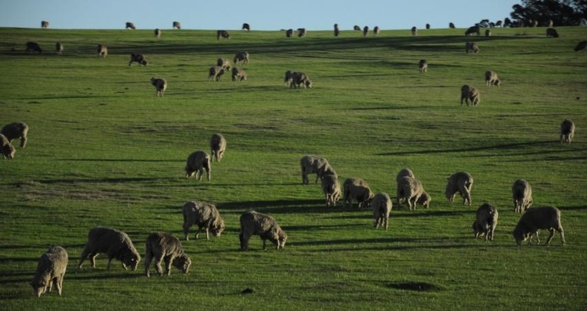 Avustralya'dan tarım ve hayvancılık izlenimleri