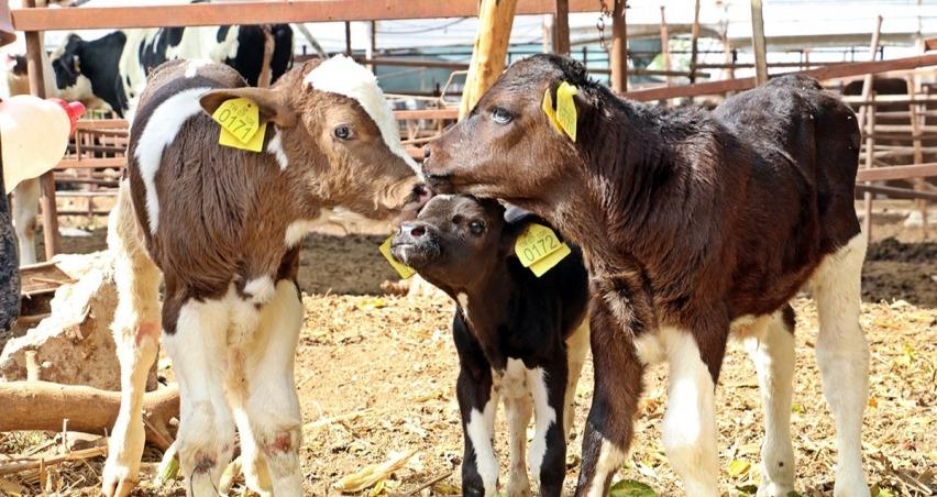 Bakan Pakdemirli'den hayvancılıkla uğraşanlar için yeni destek açıklaması!