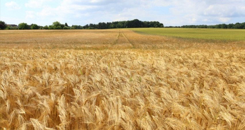 2019 yılı devlet destekli tarım sigortası fiyatları