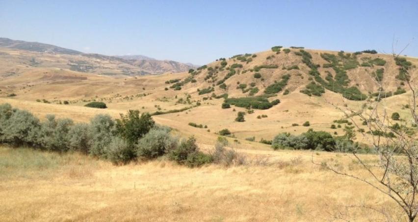 Hazine, tarım arazilerini kooperatif ve birliklere kiralayacak