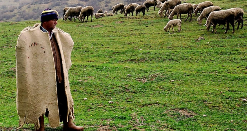 Türkiye'nin çobanları Bursa'da buluşuyor